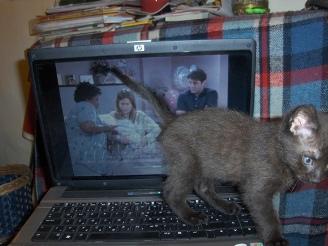 amikor marcel még fele- és nem kétszerakkora volt, mint a laptopom. és jóbarátokat nézett. folyton.